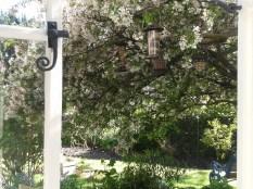 'Bird tree' in late Spring