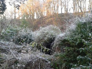 Frost and winter sun